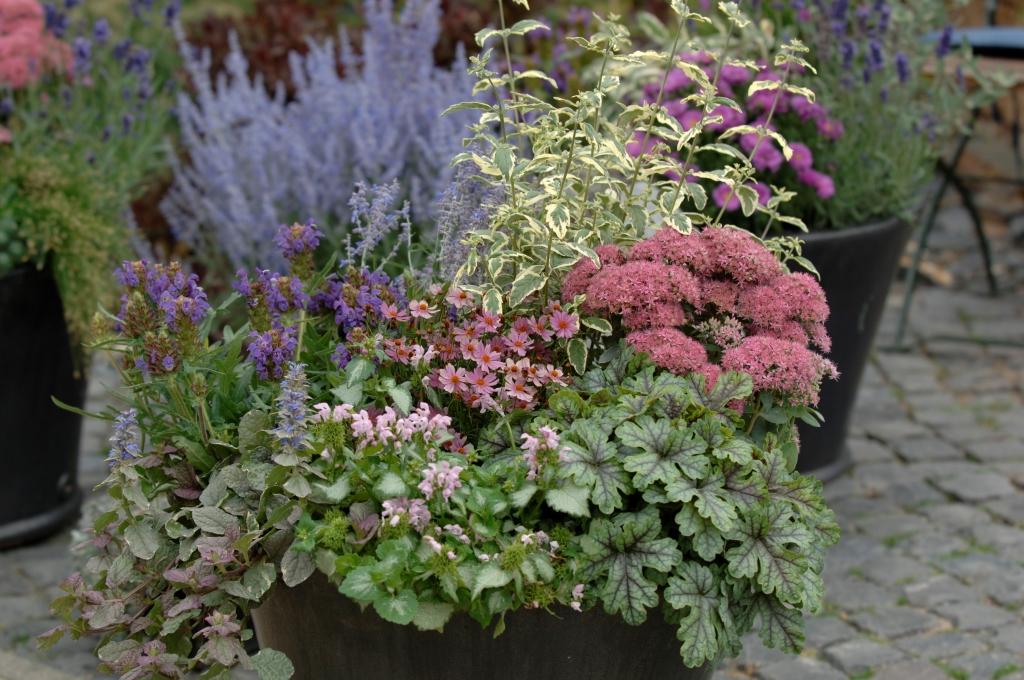A faire au jardin en novembre - Le jardin d\'ornement